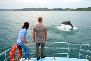 Swimming with dolphins Akaroa