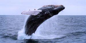 Walvissen in Nieuw Zeeland