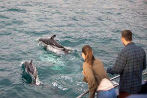Kaikoura dolphin watching tour